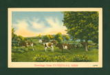 Huntsville, Ohio Greetings Cows Postcard