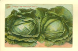 """Cabbage That Made Clyde Famous"" Postcard"