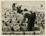 Portsmouth 1937 flood, men lay sandbags to dry