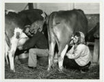 Couple milking dairy cows