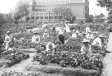 Children working in a vegetable garden