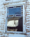 Victorian house window photograph