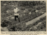 Ohio Oil Company Victory Garden Contest Photographs
