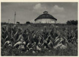 Middletown Tobacco Farm Photograph