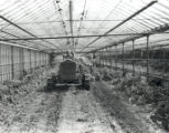 Bartter-Martin Greenhouse Photograph