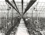 Heinrichs Greenhouse Photograph
